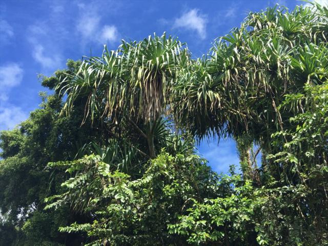15-2703 N Aweoweo St, Pahoa, HI 96778 (MLS #622198) :: Aloha Kona Realty, Inc.