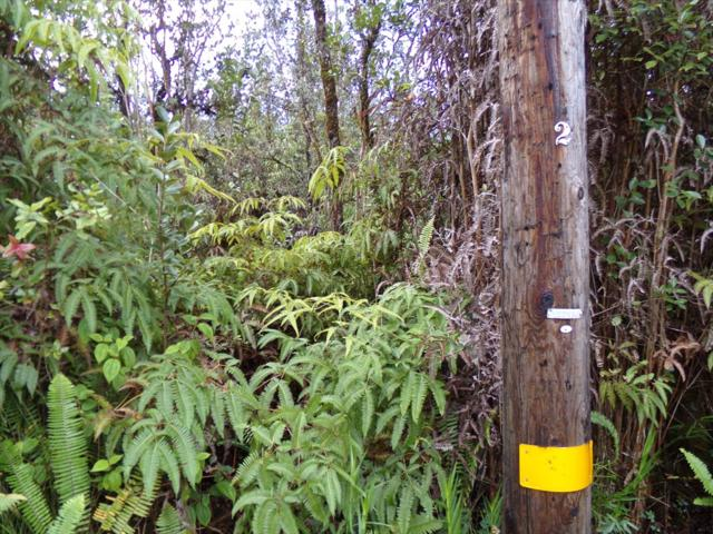 Address Not Published, Mountain View, HI 96771 (MLS #623805) :: Aloha Kona Realty, Inc.