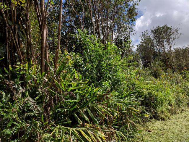 Waikiki St, Mountain View, HI 96771 (MLS #626669) :: Aloha Kona Realty, Inc.