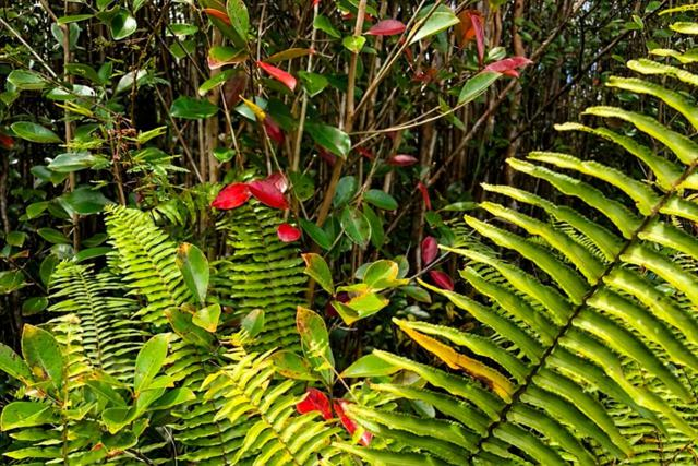 11-2759 Lehua St, Mountain View, HI 96771 (MLS #627235) :: Aloha Kona Realty, Inc.