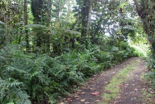 Japanese Camp Rd, Pahoa, HI 96778 (MLS #628813) :: Song Real Estate Team/Keller Williams Realty Kauai