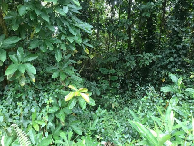 Hawaii Rd, Pahoa, HI 96778 (MLS #629910) :: Song Real Estate Team/Keller Williams Realty Kauai