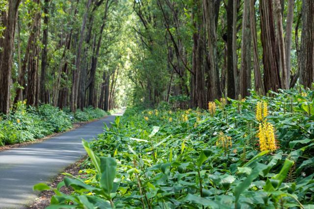 47-5333 W Waikoekoe Ln, Honokaa, HI 96727 (MLS #630056) :: Song Real Estate Team/Keller Williams Realty Kauai