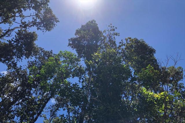 Kailua Rd, Pahoa, HI 96778 (MLS #630212) :: Song Real Estate Team/Keller Williams Realty Kauai