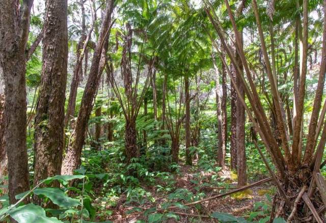 Ele Paio Rd, Volcano, HI 96785 (MLS #631193) :: Team Lally