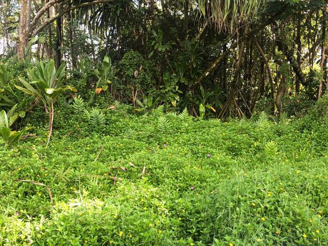 15-2801 S Mano St, Pahoa, HI 96778 (MLS #632301) :: Aloha Kona Realty, Inc.