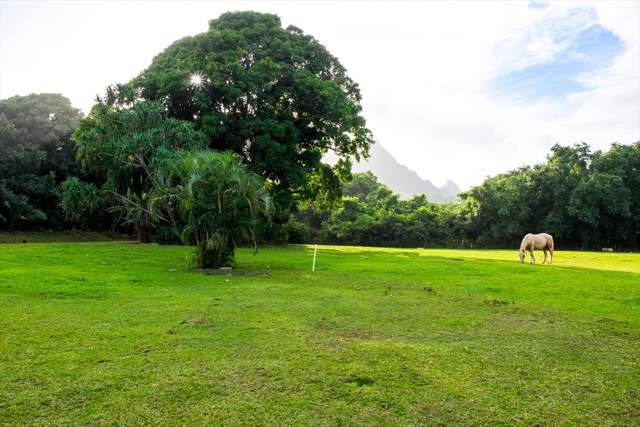 Alamihi Rd, Hanalei, HI 96714 (MLS #634901) :: Kauai Exclusive Realty