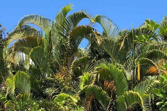 Tree Fern Dr, Pahoa, HI 96778 (MLS #639875) :: Elite Pacific Properties