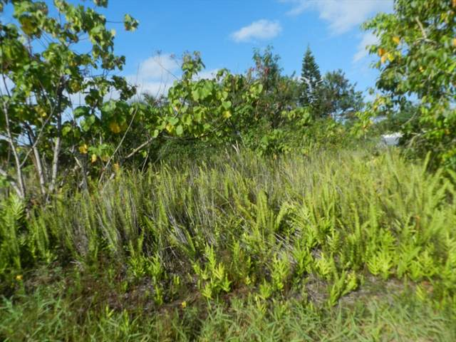Mapuana Ave, Pahoa, HI 96778 (MLS #641579) :: Iokua Real Estate, Inc.