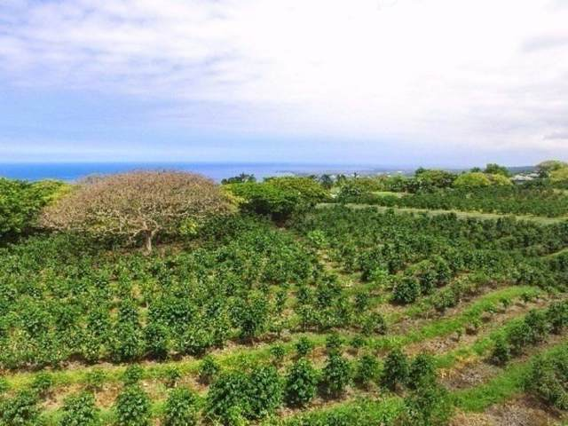 77-6239 Kaumalumalu Dr, Kailua-Kona, HI 96740 (MLS #643280) :: LUVA Real Estate