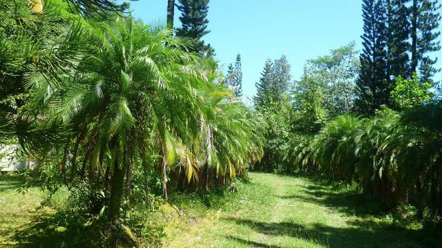 15-1659 14TH AVE (LAAMIA), Keaau, HI 96749 (MLS #643727) :: Corcoran Pacific Properties