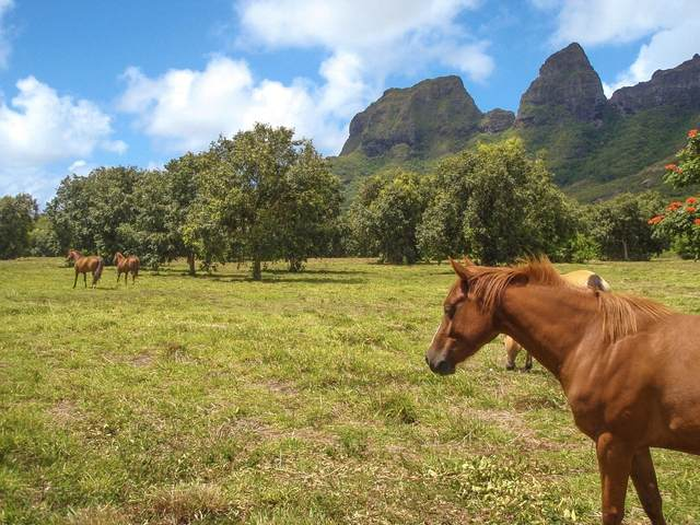Hui Road, Anahola, HI 96703 (MLS #643812) :: Kauai Exclusive Realty