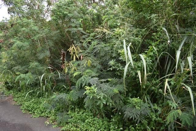 Pele St, Naalehu, HI 96772 (MLS #645172) :: Hawai'i Life