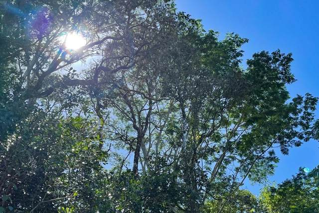 Iao St, Pahoa, HI 96778 (MLS #647062) :: Hawai'i Life