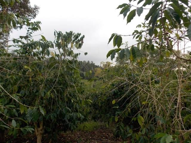 88-1536 Road, Captain Cook, HI 96704 (MLS #647282) :: LUVA Real Estate