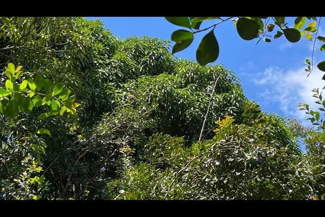 10TH AVE (KIELE), Keaau, HI 96749 (MLS #649057) :: Aloha Kona Realty, Inc.