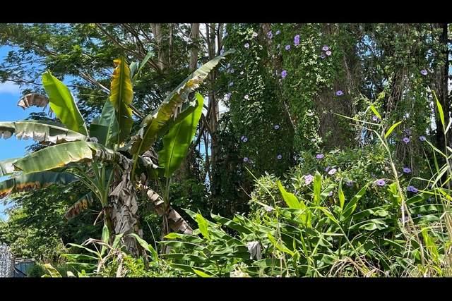 Vista Dr, Pahoa, HI 96778 (MLS #649805) :: Hawai'i Life