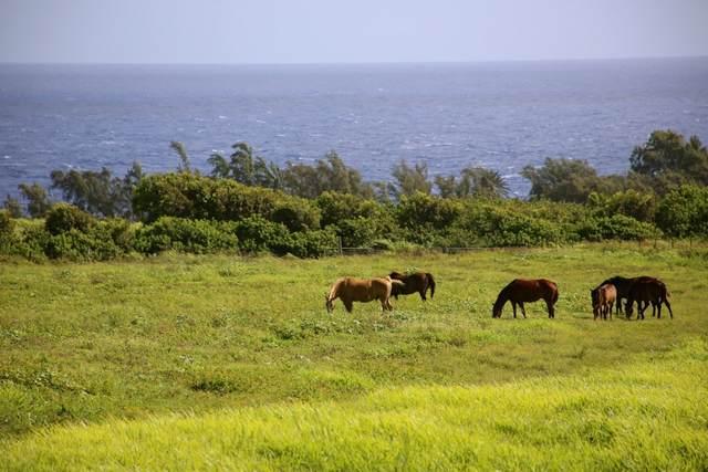 52-2635 Kahuapaa Pl, Kapaau, HI 96755 (MLS #650404) :: LUVA Real Estate