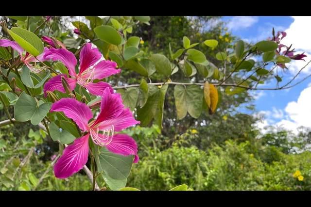 Lauhala Dr, Pahoa, HI 96778 (MLS #651974) :: Corcoran Pacific Properties