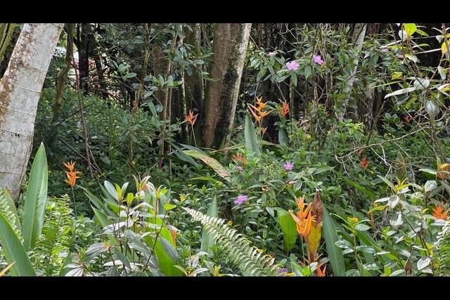 S Puni Mauka Lp, Pahoa, HI 96778 (MLS #652444) :: LUVA Real Estate