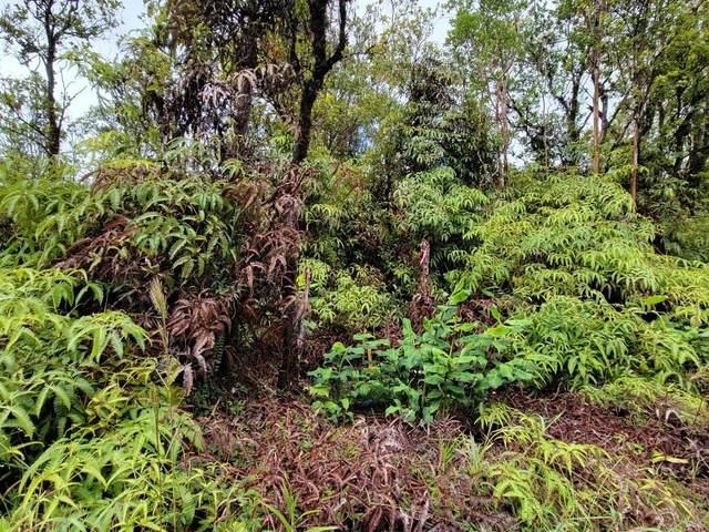 Jungle King Ave, Volcano, HI 96785 (MLS #655351) :: LUVA Real Estate