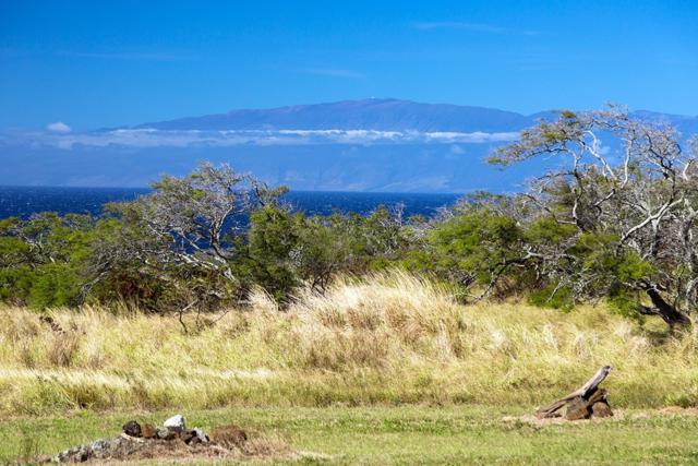 56-135 Pualani Road, Hawi, HI 96719 (MLS #619268) :: Elite Pacific Properties