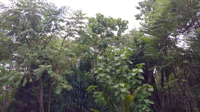 N Ina St, Pahoa, HI 96778 (MLS #621231) :: Aloha Kona Realty, Inc.