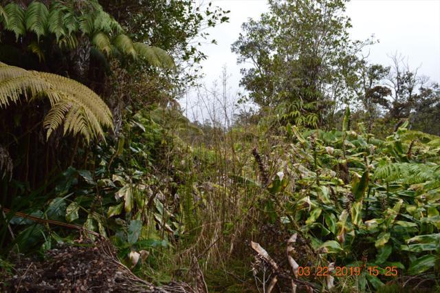 Address Not Published, Volcano, HI 96785 (MLS #626855) :: Elite Pacific Properties