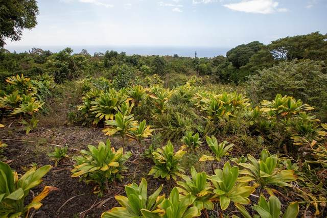 Middle Keei Rd, Captain Cook, HI 96704 (MLS #647441) :: Aloha Kona Realty, Inc.