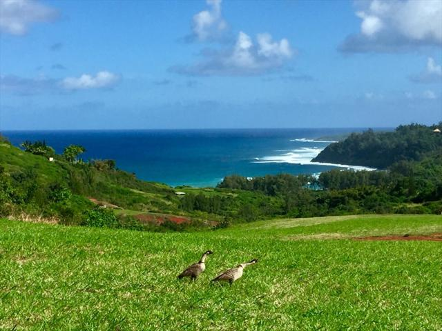 Pali Moana Place, Kilauea, HI 96754 (MLS #609436) :: Elite Pacific Properties