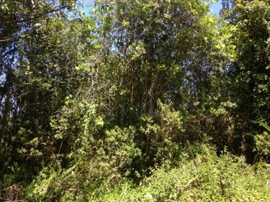 Road 14, Volcano, HI 96785 (MLS #249654) :: Team Lally
