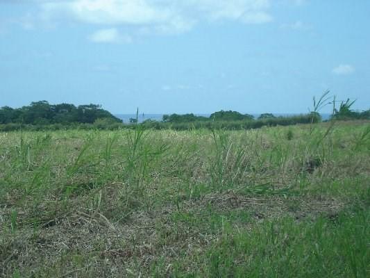 Address Not Published, Pahoa, HI 96778 (MLS #296301) :: Aloha Kona Realty, Inc.