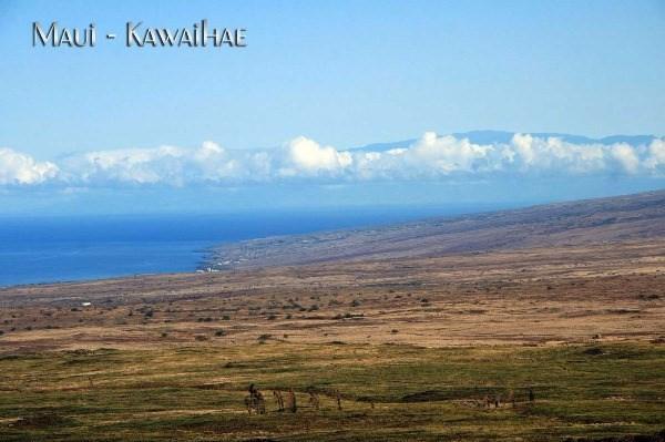 https://bt-photos.global.ssl.fastly.net/hawaii/orig_boomver_1_297397-2.jpg