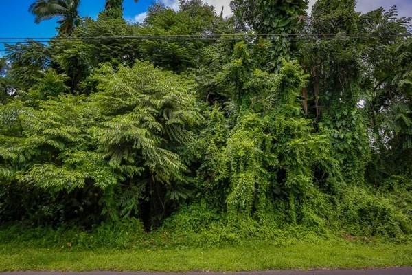 276 Kaiulani St, Hilo, HI 96720 (MLS #298018) :: Aloha Kona Realty, Inc.