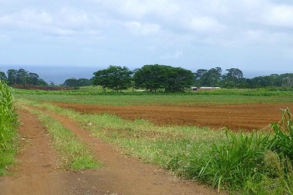 28-475 Sugar Mill Road, Pepeekeo, HI 96753 (MLS #298103) :: Aloha Kona Realty, Inc.