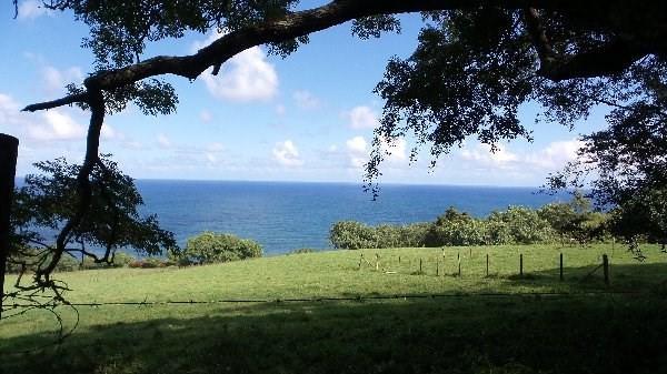 36-2676 Old Mamalahoa Hwy, Ookala, HI 96774 (MLS #601338) :: Aloha Kona Realty, Inc.