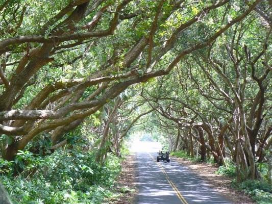 https://bt-photos.global.ssl.fastly.net/hawaii/orig_boomver_1_604300-2.jpg