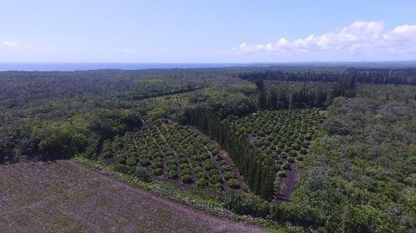 1-OFF Macadamia Nut Road, Keaau, HI 96749 (MLS #607713) :: Elite Pacific Properties