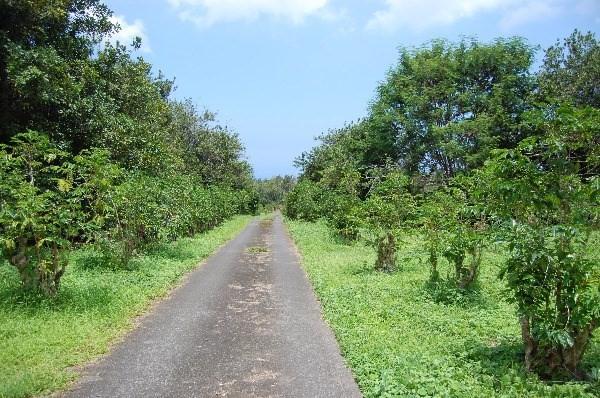 79-7421 Hawaii Belt Rd, Kealakekua, HI 96750 (MLS #607755) :: Aloha Kona Realty, Inc.
