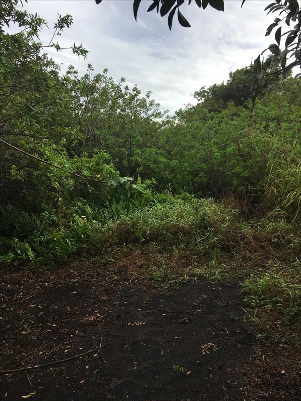 Address Not Published, Naalehu, HI 96772 (MLS #608486) :: Aloha Kona Realty, Inc.