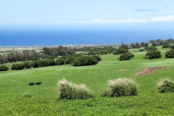 Hono'ipu /Puuhue Rd, Hawi, HI 96719 (MLS #609265) :: Elite Pacific Properties