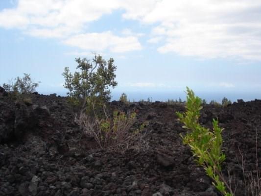 Macadamia Dr, Ocean View, HI 96737 (MLS #609726) :: Elite Pacific Properties