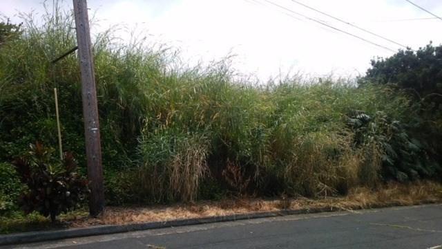 Address Not Published, Kealakekua, HI 96750 (MLS #612166) :: Elite Pacific Properties