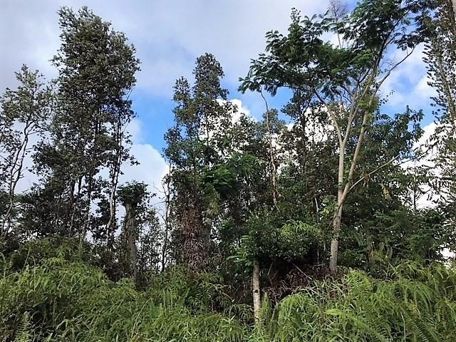 Address Not Published, Pahoa, HI 96778 (MLS #613210) :: Elite Pacific Properties