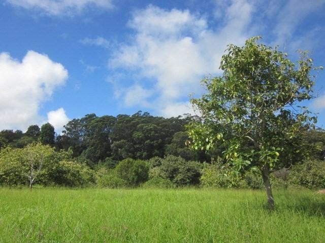 Address Not Published, Honokaa, HI 96727 (MLS #614220) :: Aloha Kona Realty, Inc.