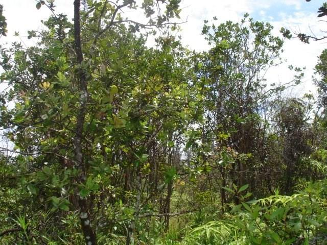 Road 10 (Poouli), Kurtistown, HI 96760 (MLS #615435) :: Aloha Kona Realty, Inc.