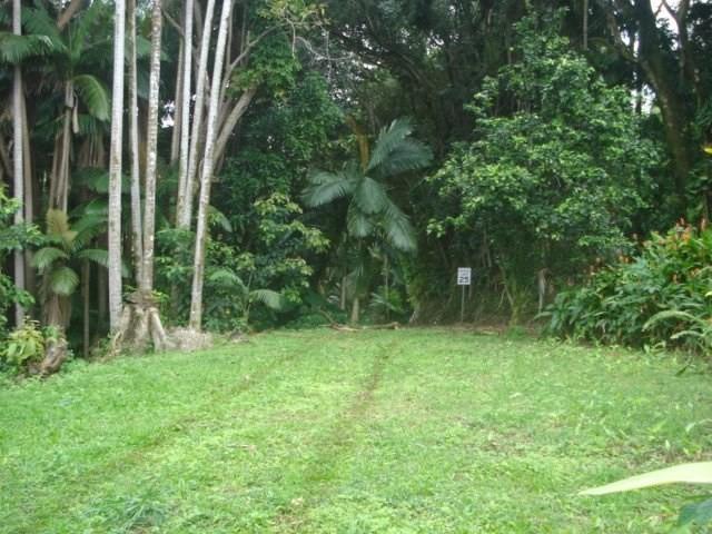 Old Mamalahoa Hwy, Ninole, HI 96773 (MLS #616058) :: Elite Pacific Properties