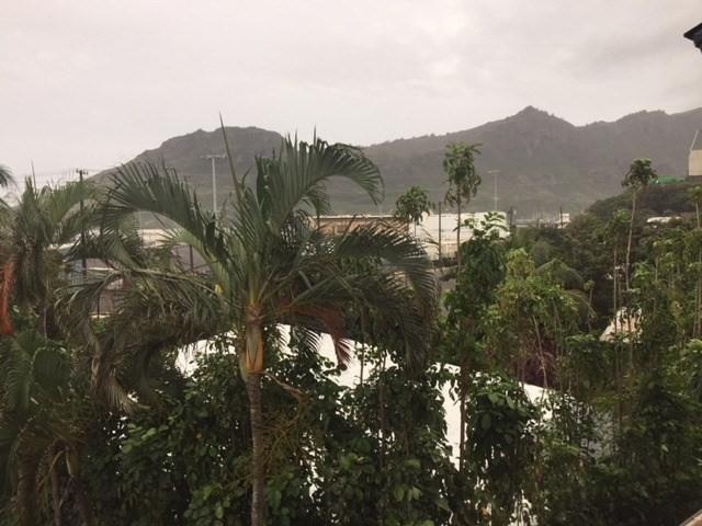 3411 Wilcox Rd, Lihue, HI 96766 (MLS #616070) :: Aloha Kona Realty, Inc.