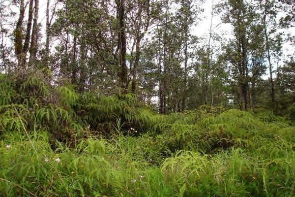 Bamboo Dr, Pahoa, HI 96778 (MLS #616412) :: Aloha Kona Realty, Inc.