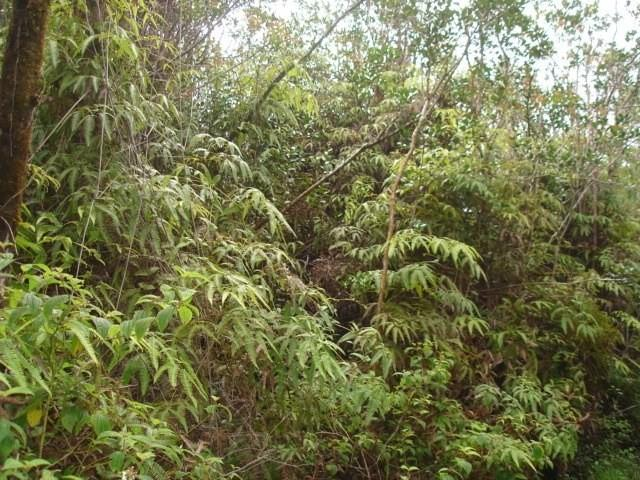 Road 2 (Ao), Mountain View, HI 96771 (MLS #616607) :: Aloha Kona Realty, Inc.